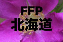 2016年度 JFAフットボールフューチャープログラム(FFP)北海道代表選手決定!