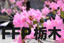2016年度 JFAフットボールフューチャープログラム(FFP)栃木県代表選手決定!