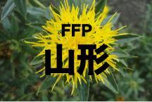 2016年度 JFAフットボールフューチャープログラム(FFP)山形県代表選手決定!