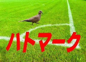 2017年度 ハトマーク フェアプレーカップ 第36回 東京都4年生サッカー大会 中央大会 組み合わせ決定!6/24,25開催