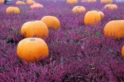 関東地区の今週末の大会・イベント情報 【10月21日(土)、22日(日)】