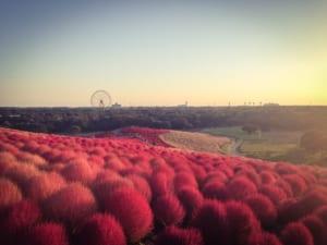 九州地区の今週末の大会・イベント情報【10月7日(土)、10月8日(日)、10月9日(祝)】
