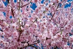 関東地区の今週末の大会・イベント情報 【3月10日(土)、3月11日(日)】