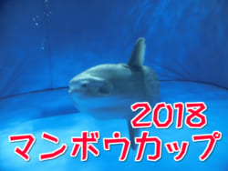 2018年度 マンボウカップ第24回日豊海岸少年サッカー大会 組合せ決定!4/7開催!