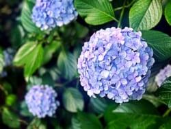 関東地区の今週末の大会・イベント情報【6月16日(土)、17日(日)】